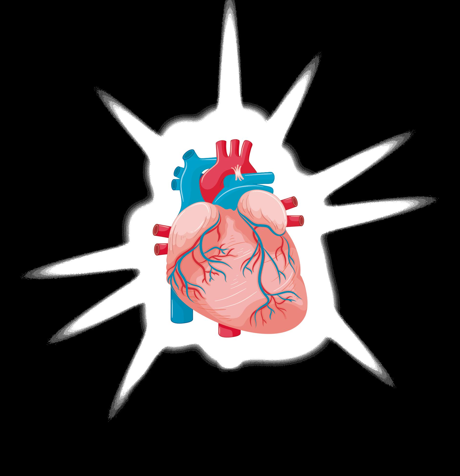 Nutrabiotics Curso Taller 2019 - Corazón